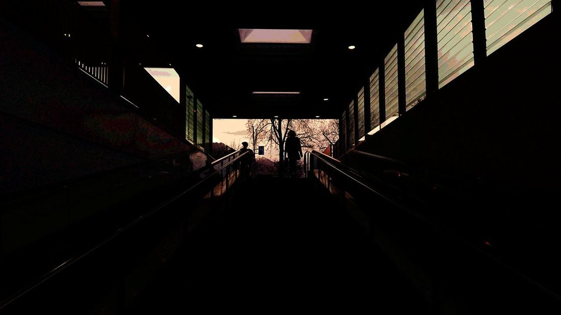 Emerging into the light Light Light And Shadow Window Tree Winter Dusk Dusk In The City Dusk Sky City Staircase Steps And Staircases Steps Tunnel Architecture Built Structure Escalator The Way Forward Diminishing Perspective