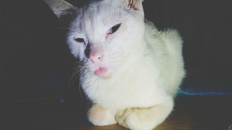 Cat Animalphotography Cats 🐱 Cats Ants On The Go! Cat Photography Insects Photography Beauty In Nature Animal Wildlife Cats Of EyeEm Animal Themes Cat Lovers Cateyes Catsagram Catlovers Catsoftheworld Love Them ❤