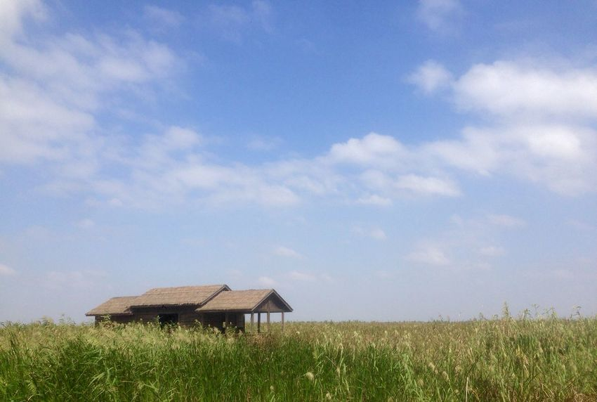 Miss the sweetness in the countryside. Yearn the warmth in spring. Hanging Out Nature Countryside