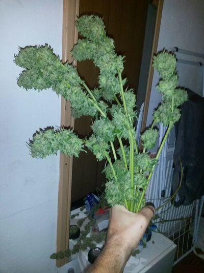 Bouquet Bouquet Of Buds Bouquet Of Flowers Buds Cannabis Cannabis Bud Marihuana Marijuana Marijuana <3 Sativa Weed