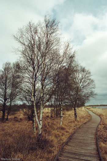 Am ewigen Meer Bare Tree Beauty In Nature Cloud - Sky Day Grass Landscape Nature No People Outdoors Scenics Sky Tranquil Scene Tranquility Tree