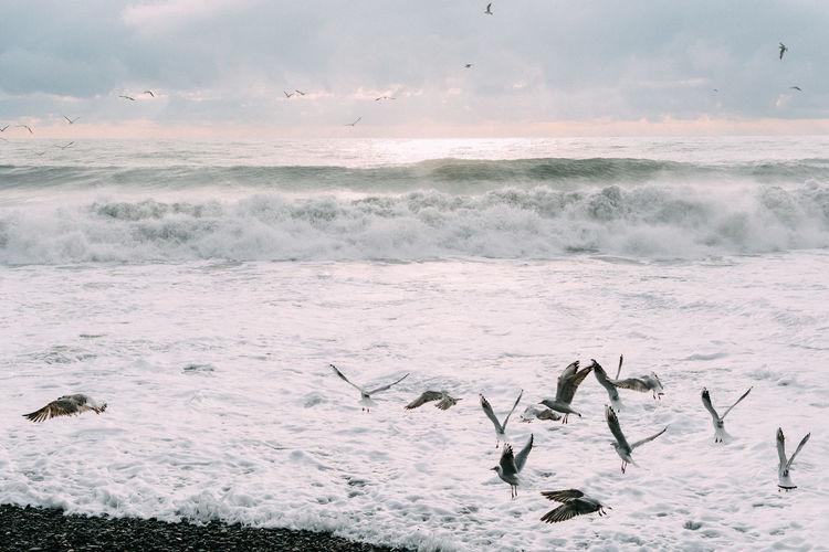 Sea Water Group