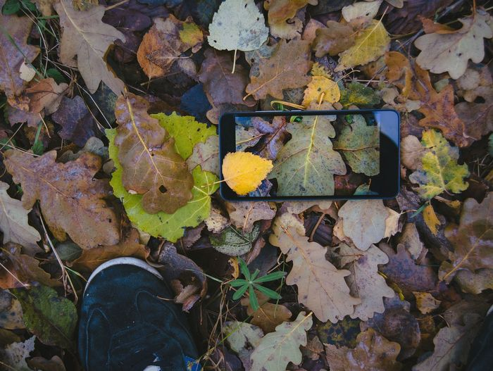 Low Section Of Person Standing By Smart Phone On Fallen Autumn Leaves