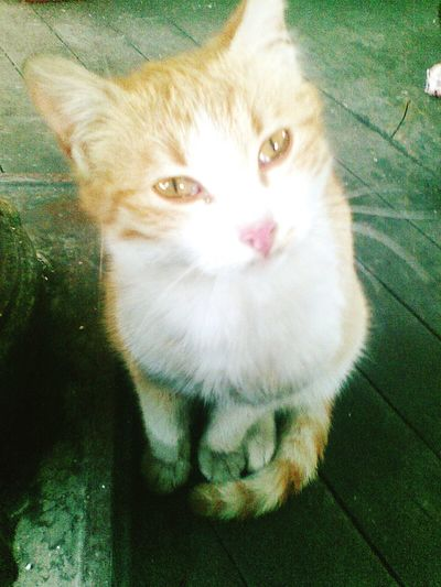 Cat Mırmır Animals Kedicik Kedi