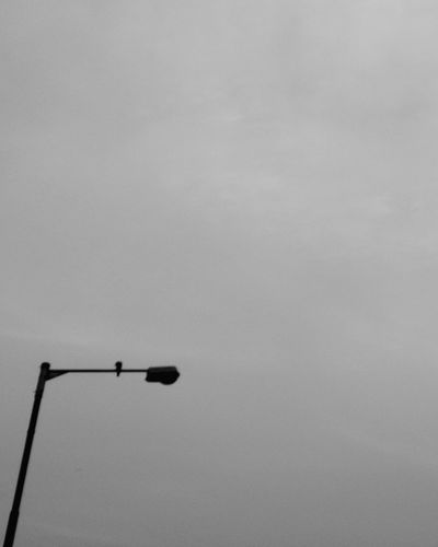 Sky Low Angle View Perching Outdoors Nature No People Abstract Photography Blackandwhite Pigeons Silhouette Streetlights And Sky Adapted To The City Black And White Friday