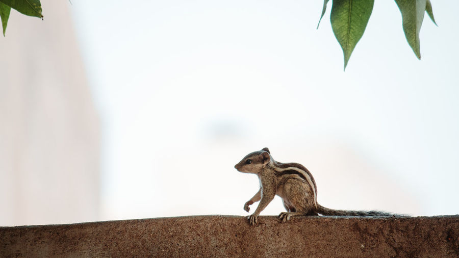 Animal Animal Themes One Animal Animal Wildlife Mammal Animals In The Wild Vertebrate No People Focus On Foreground Rodent Day Nature Wall Squirrel Close-up Wall - Building Feature Leaf Plant Part Side View Outdoors Squirrel
