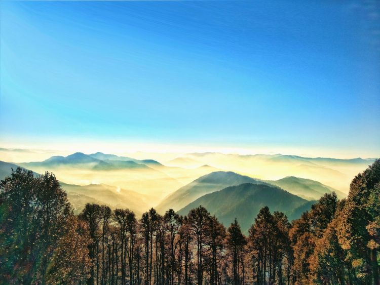 The heaven's getaway ❤ Winter Trees Himalayas Himachal Pradesh, India Photography Travel Destinations Tree Mountain Dawn Fog Rural Scene Beauty Agriculture Forest Sunlight Morning Mountain Peak Snowcapped Mountain This Is Masculinity