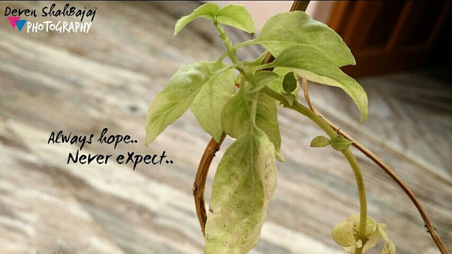 Always Hope :) Nature_collection Nature Taking Photos Beautiful Light Up Your Life Trees Leaves Life Quotes Photography