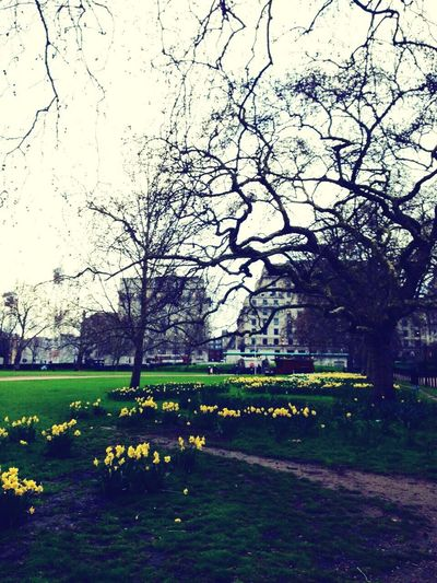 Green Park Fieldofdaffodils Daffodils Garden Spring Check This Out Hello World
