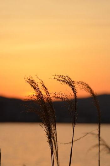 """蔵出しの一枚ですが。Introducing Culture Of Japan Which Must Be Left To The Future…… """"未来に残す日本の文化"""" Lake View 琵琶湖 Sunset_collection"""