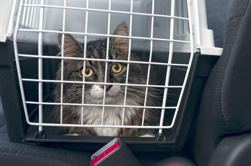 Tabby cat in a