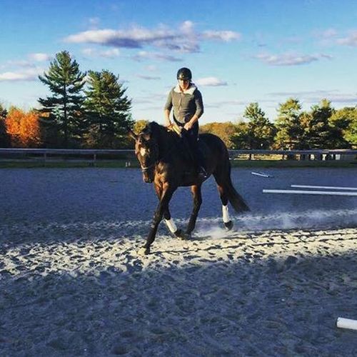My hands are not right, but can we talk about how amazing this horse is!!! 💕❤ Horsegirl Horsesofinstagram Equestrianlife BeastModeON Talldarkandhandsome Thoroughbred Horselovers Gorgeousboy Equestrian Dressagehorse Hemakesmebetter MYheart October Newenglandgirl Newengland Autumn Perfectshot Perfection Followme photo cred @geegeeita