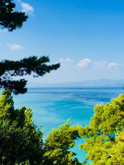 Sky Water Plant Tree Sea Scenics - Nature Tranquility Blue Green Color Beauty In Nature Nature Horizon Over Water Beach Tranquil Scene