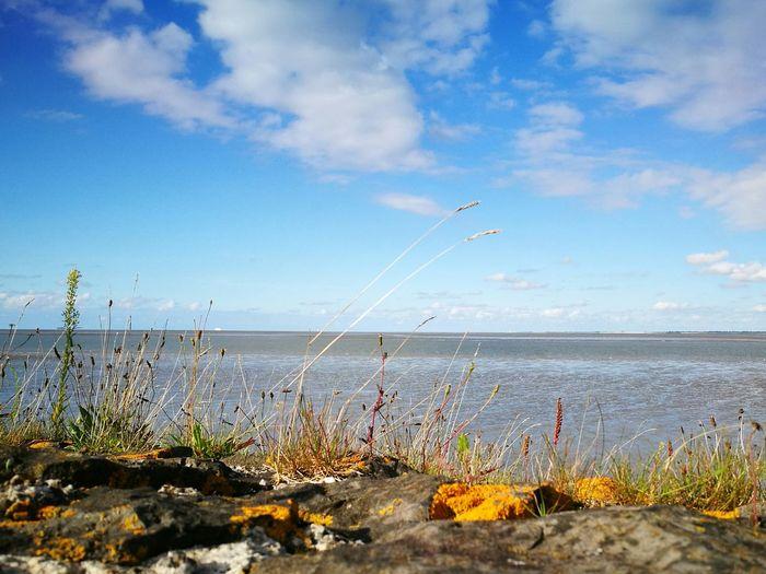 Sea View Eems Delfzijl Naturelovers