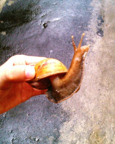 Gerry the Snail🐌 on the village road