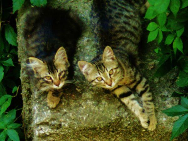 Cat Catmodel  Catlovers