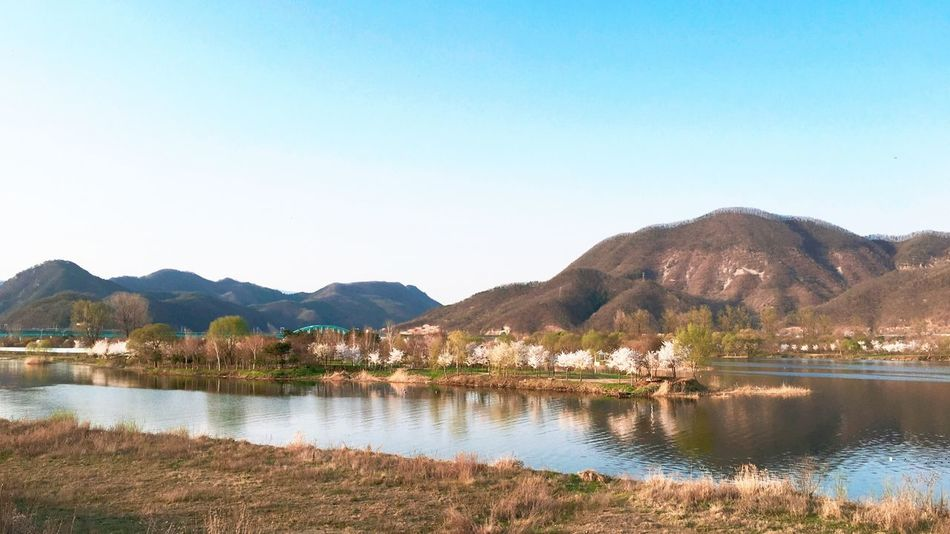 IPhoneography Travel South Korea Cherry Blossoms Trees Island View Jarasum Spring