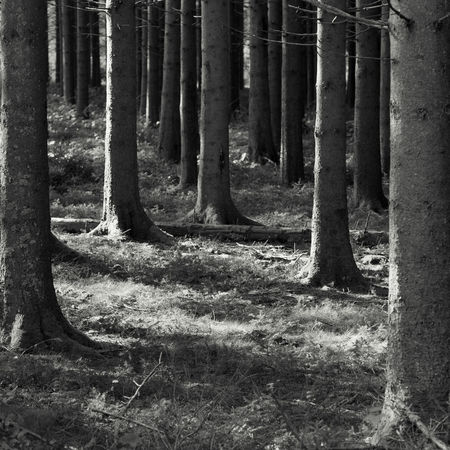 I'm afraid of losing myself. Tree Tree Trunk Forest Nature No People Trunk Land WoodLand Plant Day Growth Non-urban Scene Scenics - Nature Tranquility Outdoors Environment Landscape Beauty In Nature Remote Field