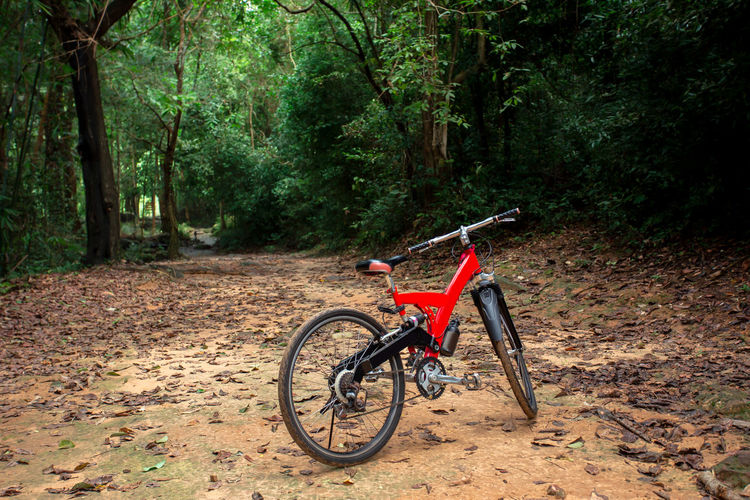 Bicycle on road amidst trees in forest
