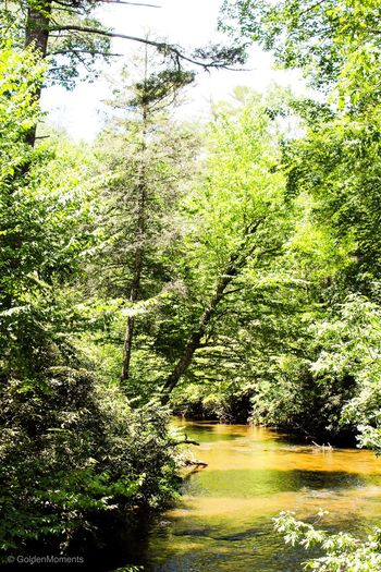 Mountain stream Mountain Stream, Mountain Creek Plant Tree Nature Sunlight No People Day Growth Beauty In Nature Tranquility Scenics - Nature