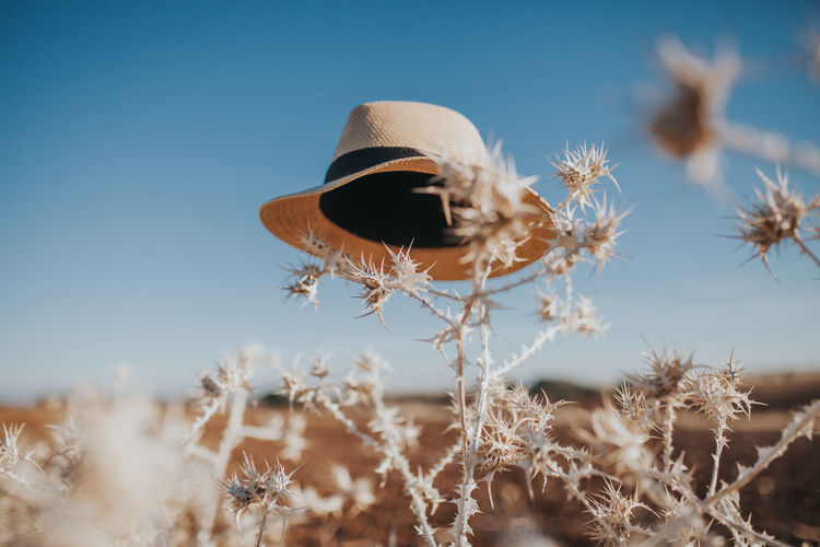 Abstract Photography Hat Hat Day Clear Sky Conceptual Conceptual Photography  Day Dry Dry Flower  Field Flower Fragility Growth Hats Nature No People Outdoors Plant Sky Thistle Visual Creativity