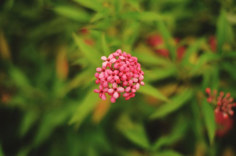 Close-up of pink flower buds growing outdoors