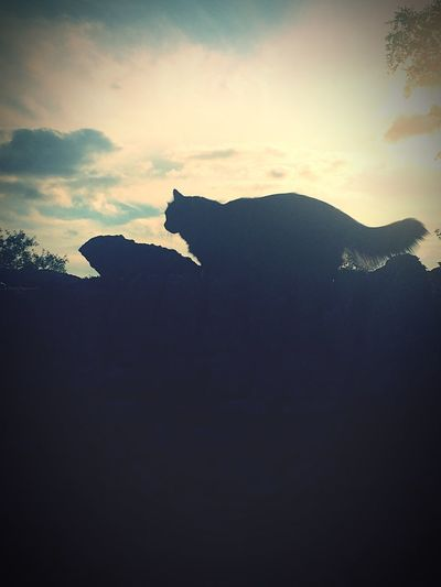 Silhouette Nature Sky Beauty In Nature Sunset No People One Animal Animal Themes Outdoors Animals In The Wild Scenics Day