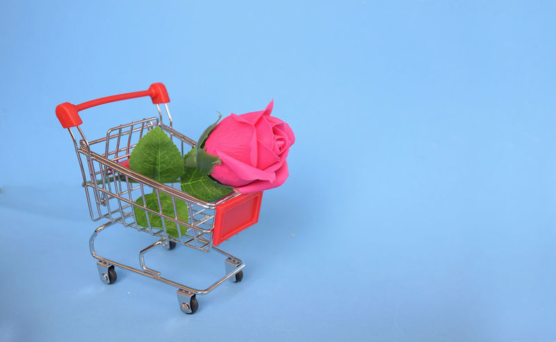 Pink rose flower on shopping cart with blue background Love and happy Valentine's day concept Business Love Market Pink Poster Red Romance Romantic Sale Supermarket Valentine Buy Cart Color Concept Decoration Flower Gift Purchase Retail  Rosé Shop Store Surprise Sweet