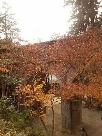 Japan Hugging A Tree Kyoto,japan 南禅寺 水路閣 Autumn Colors