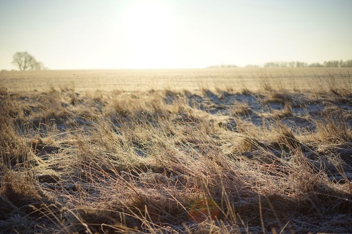 Field Nature Tranquility Clear Sky Landscape Tranquil Scene Growth Beauty In Nature Scenics No People Sunlight Day Outdoors Agriculture Grass Rural Scene Sky Wheat Timothy Grass Hay Bale Frozen Winter