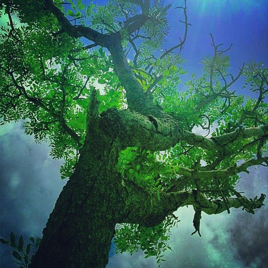 Trees in Plays of Light (3 of 3) Insta_trees Ilovebaretrees Nature_perfection Beautree Treescollection Treeshunter Hubnature Ic_trees Unitedbytrees Branching_out Jj_forum_0548 Motherearth Tree_captures Treeframing Jj_forum_0586