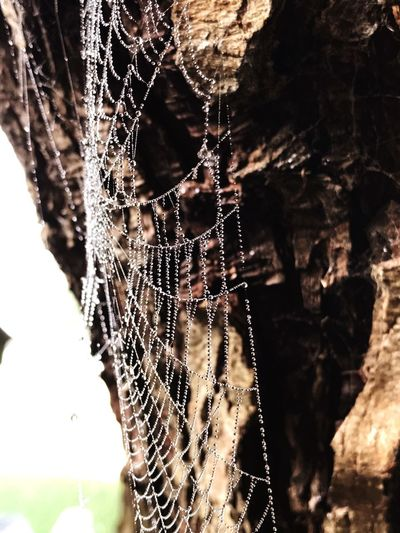 The Week On EyeEm Spider Web Focus On Foreground Close-up Spider Web Nature Amsterdam Spiderweb Day Outdoors One Animal Trapped Survival No People Animal Themes Fragility Beauty In Nature Beauty In Nature Morning Dew Early Morning