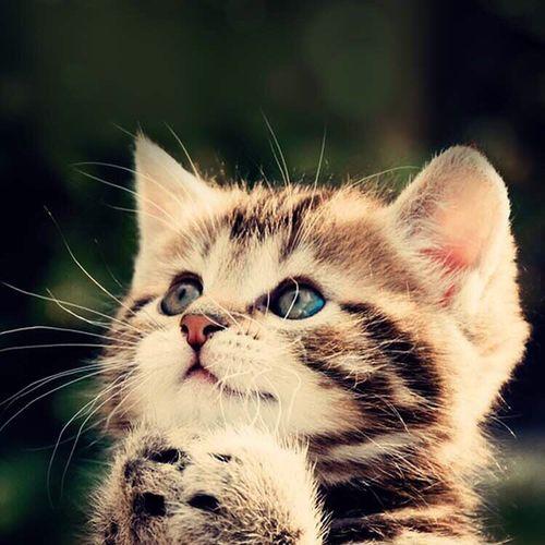 😍😍😍 Photo Cat Cats Like Picture Animals Baby Photos Enjoying Life Open Edit Love Cats 🐱 Taking Photos Wonderful