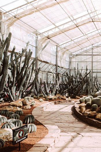 กระบองเพรช Day No People Plant Nature Growth Greenhouse Green House Indoors  Architecture Built Structure Flooring Industry Damaged Domestic Room Metal Ceiling Abandoned Decline Deterioration Sunlight Ruined Plant Nursery