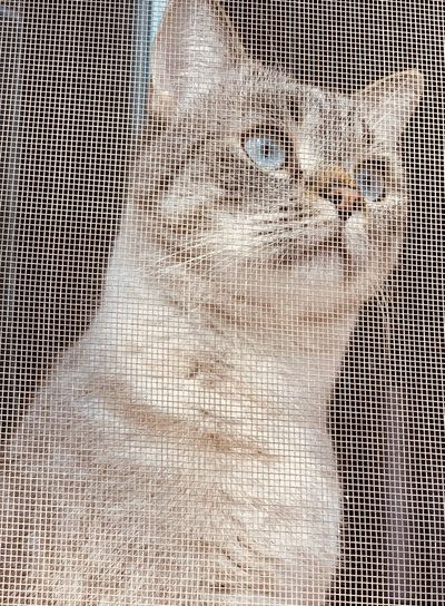 Close-up of cat seen through wire mesh