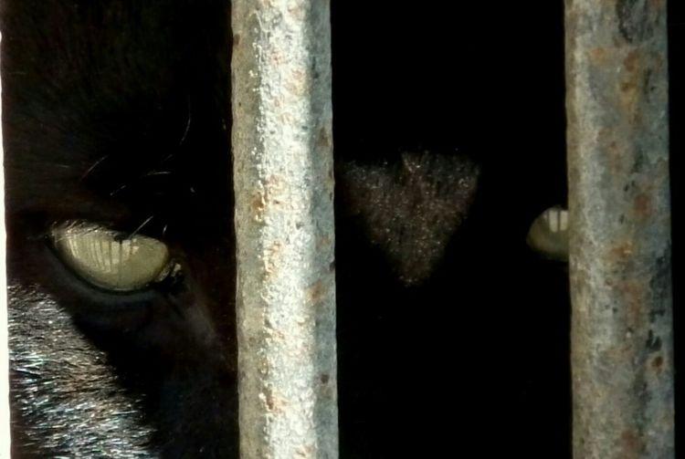 Panther, Eyes Look