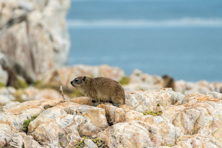 Close-up of animal looking away sitting on rock