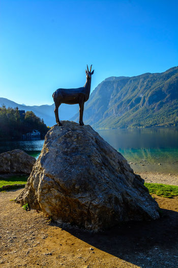 Nature Sky Day Bohinjsko Jezero Animal Mammal Animal Themes One Animal Animal Wildlife Mountain Clear Sky Standing Domestic Animals Water Animals In The Wild Rock Vertebrate Solid Environment Beauty In Nature No People Herbivorous Outdoors