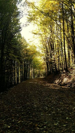 today i ran this way getting ready for competition🤗🤗 Nature Beauty In Nature Forest Beauty In Nature Tree Eyem Nature Lovers  From My Point Of View Autumn Running Taking Photos Wildlife & Nature The Week On Eyem Narure_collection EyeEm Gallery Porntree Sport Colors Of Autumn No People I LOVE RUNNING