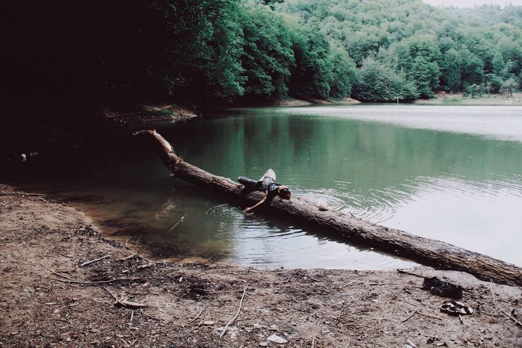 Come talk to me Water Nature Reflection Tree Day Tranquility Beauty In Nature Plant Lake Beach Land Outdoors Sunlight Waterfront Tranquil Scene Non-urban Scene