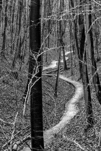 365project Meandering Path Snaking Bare Tree Beauty In Nature Forest Nature Pathway In The Forest Tranquility Tree Trunk Valley