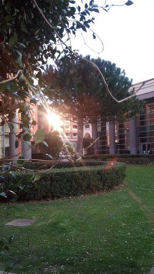Natural Light Beauty Nature Sunreflection
