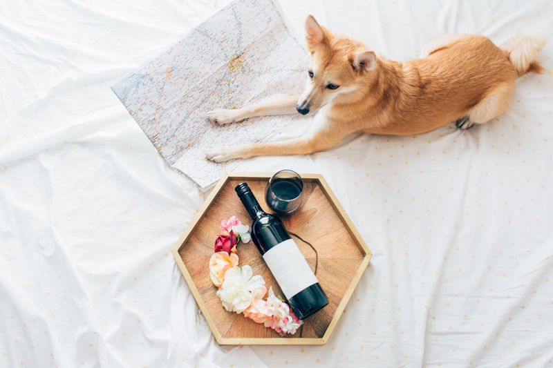 Planning my next trip in Texas! Best Friend Buddy Traveling In USA Companion Dog Traveler Travel Destination Floral Arrangement Serving Tray Hexagon Quiet Moment Quiet Moments Cozy Moments Cozy Place Bedroom Austin Texas Austin, TX Wine Bottle Wine moments Map Relaxing Moments Relaxing Place Planning A Trip Shiba Inu Pets Dog One Animal High Angle View Domestic Animals Indoors  Relaxation