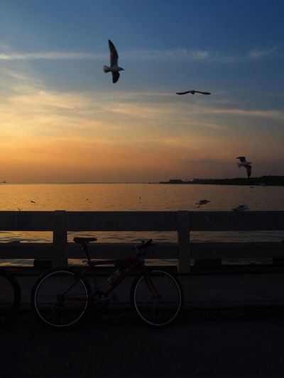 🚴‍♀️ CyclingUnites 🚴‍♀️ Bangpu Beauty In Nature Bicycle Bird Bridge View Exceptional Photographs Eye4photography  Flying Landscapes Mode Of Transport Nature No People Outdoors Reflection Sea Sea And Sky Seagull Silhouette Street Photography Sunset Tadaa Community Transportation Travel Water Reflections