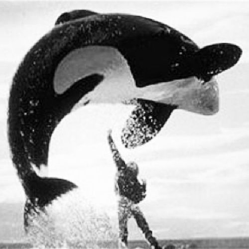 How many folks can make an Orca jump like Jordan? Uhh none but me. Nophotoshop ImRaw