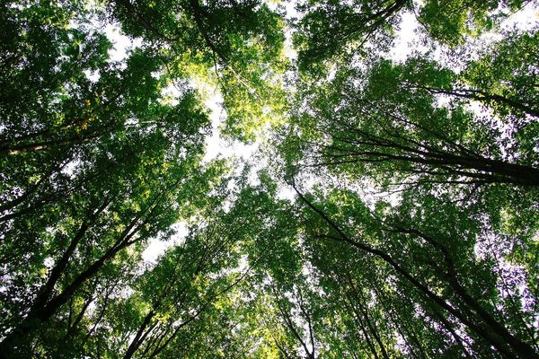 Nobody knows the wind. Neither I or you. But it's been said that when the leafs bow down, wind is passing by. Tree Low Angle View Forest Nature Beauty In Nature Growth Branch Tranquility Green Color Tranquil Scene WoodLand Freshness Sky Scenics Outdoors No People