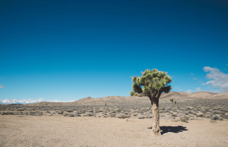 Arid Climate Arid Landscape Barren Beauty In Nature Blue Blue Sky Clear Sky Day Death Valley Death Valley National Park Desert Desert Landscape Mountains Nature Nature No People Outdoors Roadtrip Sand Scenics Sky Tranquil Scene Travel Destinations Tree Stay Out