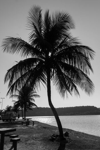 Beach Beauty In Nature Blackandwhite Clear Sky Day Growth Julhofragaphotography Nature No People Outdoors Palm Tree Scenics Sea Sky Tranquil Scene Tranquility Tree Tree Trunk Water