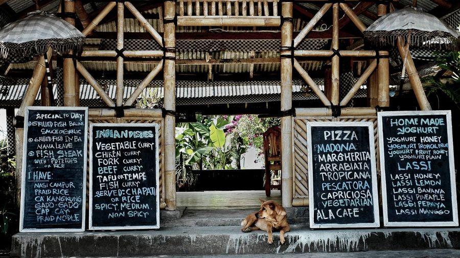 Dog sitting amidst menu at restaurant