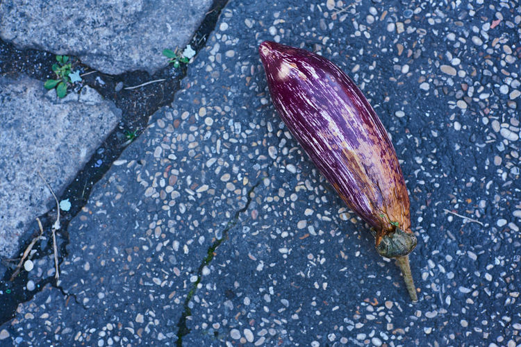 High angle view of eggplant on cobbled street